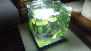 nano aquarium einrichten