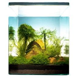 dennerle-aquariumpflanzen-9148-bamboo-cube-30l-1