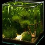 kleines Aquarium von Dennerle